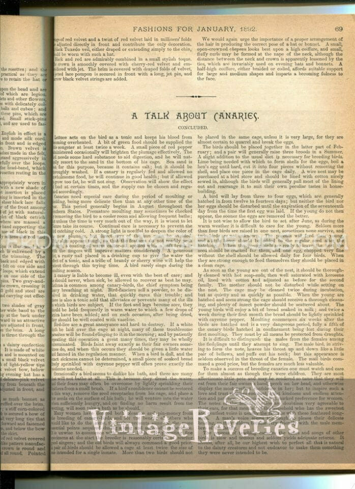 Victorian Canary Keeping Article